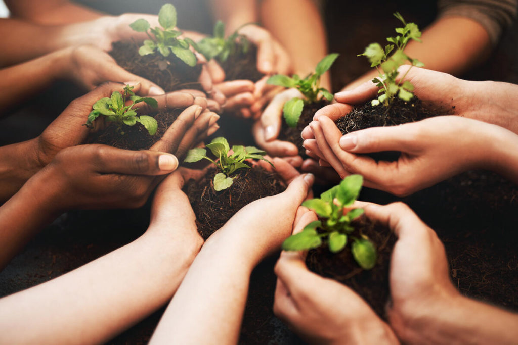 succession_planning_grow_nurture_cultivate_share_hands_diversity_collaboration_100769989_large_3x2.jpg